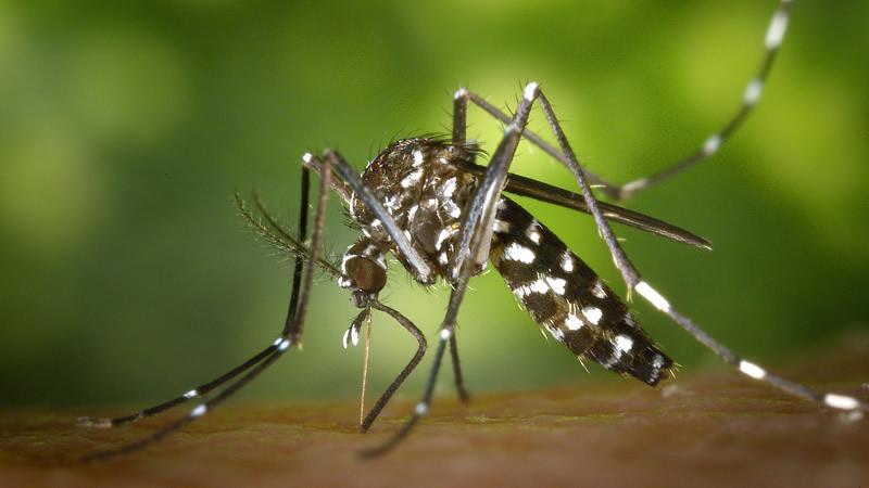 48 muertes probables por dengue prenden las alertas de epidemia