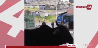 Toro ingresa a Estación de Policía de Usme