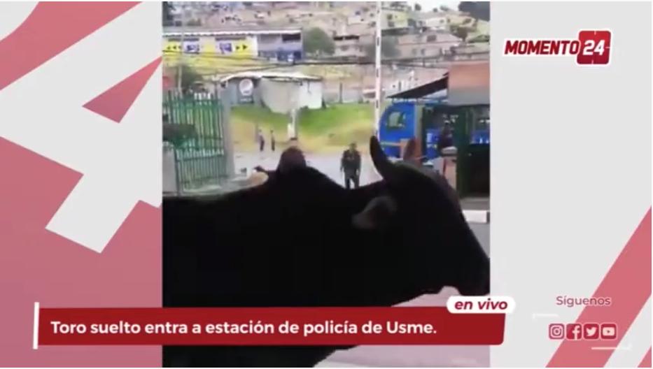 (Video) Toro entra a estación de policía de Usme