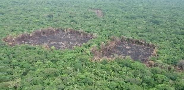 Gobierno retoma el control de más de mil hectáreas deforestadas en Tinigua