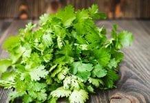 Siembra cilantro en casa sin tener semillas