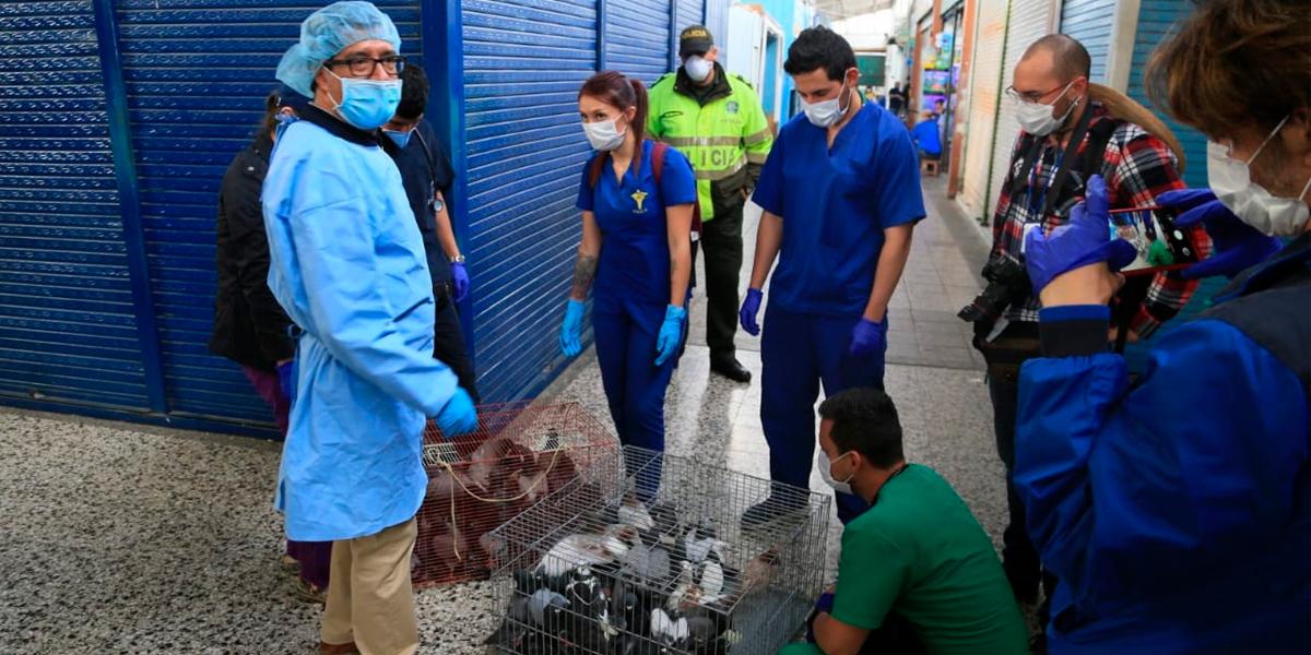 Clausuran 29 locales de venta de animales en la Plaza El Restrepo