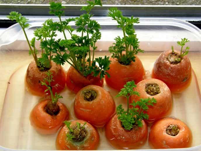 Así puedes sembrar zanahoria en casa sin tener semillas