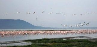 ¿Por qué migran las aves?