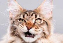 Consejos básicos al separar una pelea de gatos