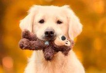 Consejos básicos para cuidar un perro sordo