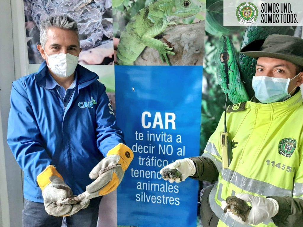 Animales silvestres son rescatados en Soacha