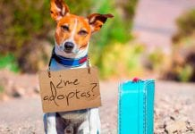 Tres razones para no abandonar a tu mascota