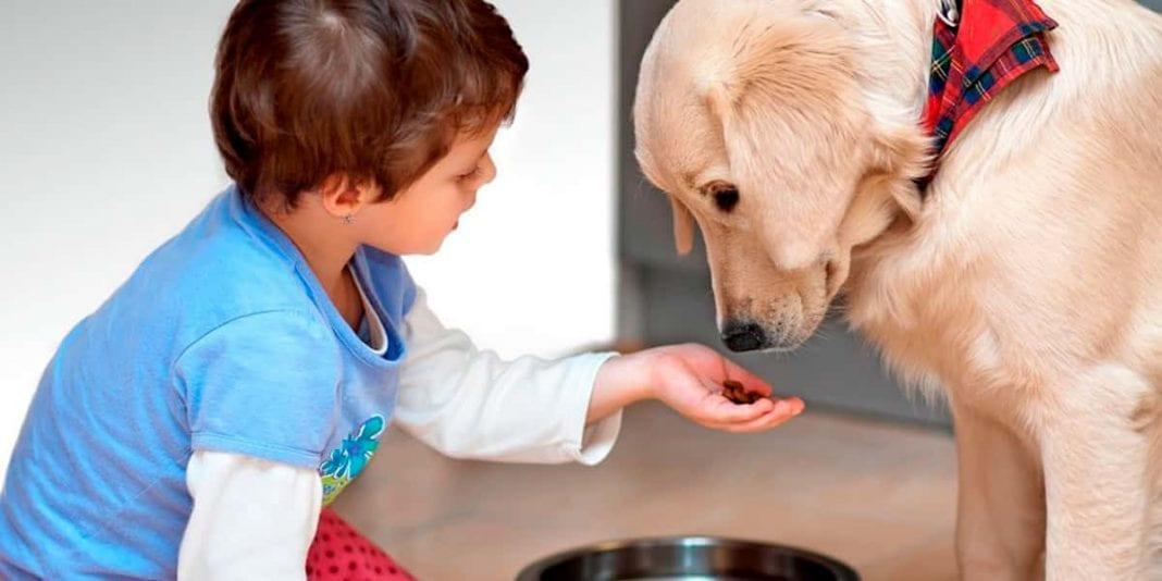 ¿Es beneficioso que los niños crezcan con mascotas?
