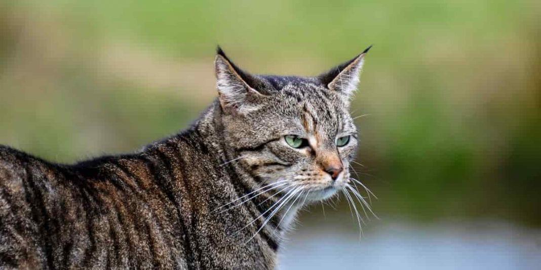¿Es necesaria la desparasitación en los gato?