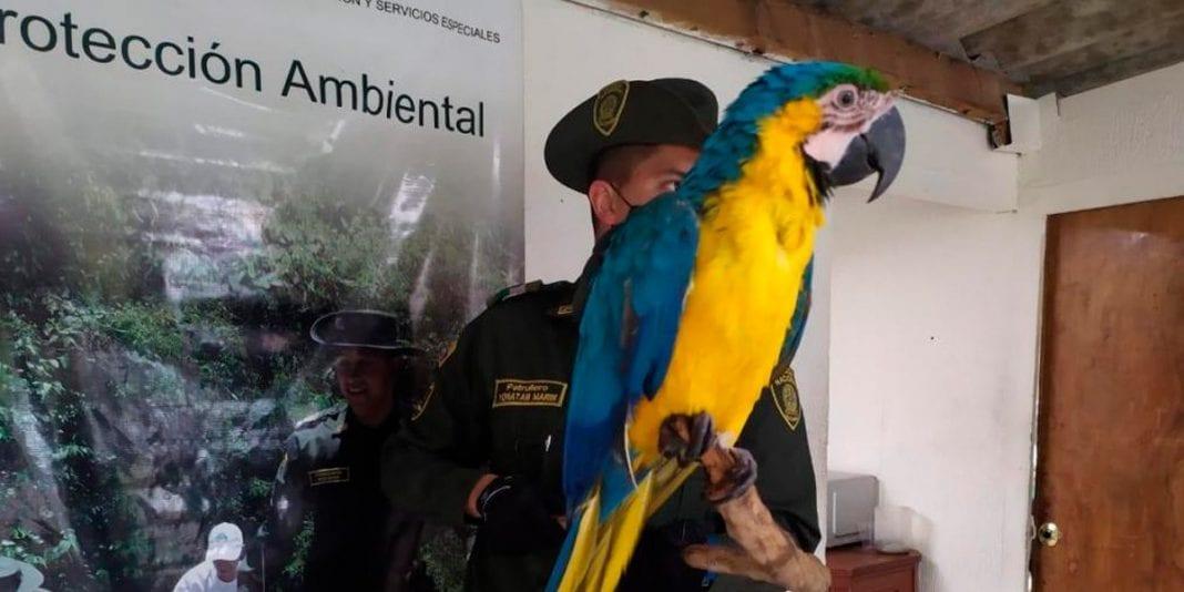 300 aves han sido recuperadas durante la cuarentena