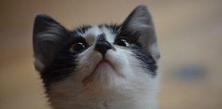 Conoce cuales alimentos pueden resultar tóxicos para tu gato