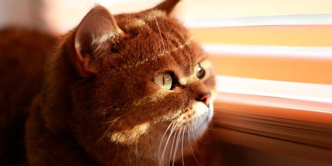 Consejos básicos para cuidar un gato ciego