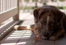 Refugio con 130 perros de la calle, solicita ayuda para evitar desalojo