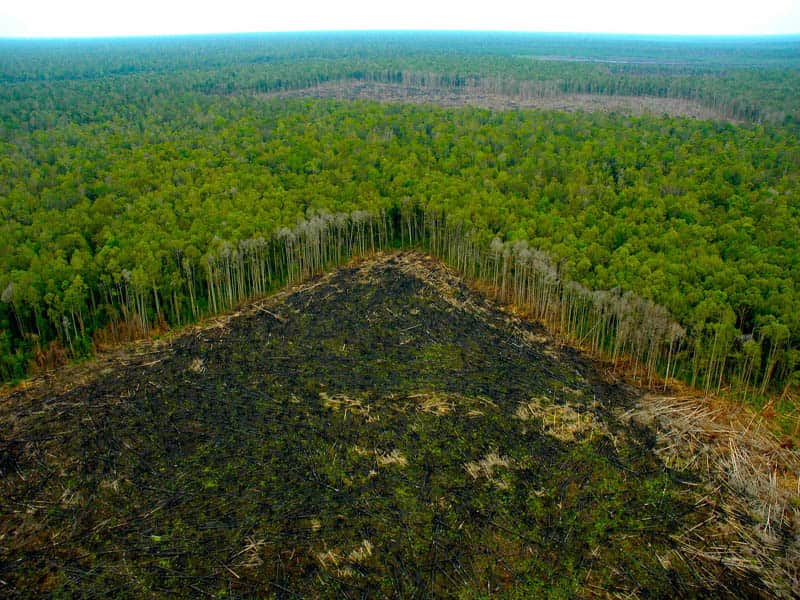 Amazonía brasileña
