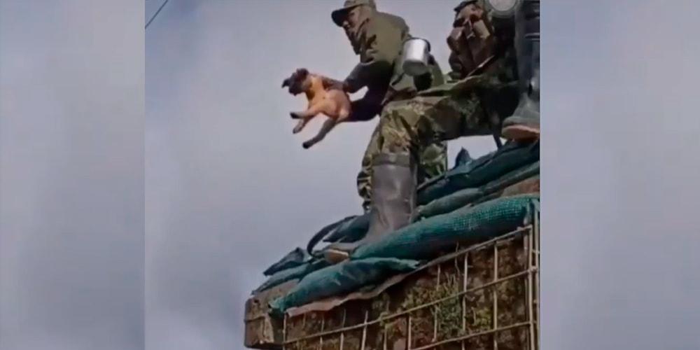 Soldados asesinan a un perro maltrato animal