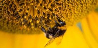 ¿Por qué son importantes las abejas