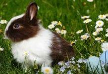 Conoce los cuidados que necesita un conejo
