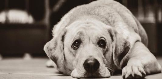 Consejos para afrontar la perdida de una mascota