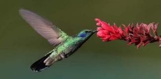 Descubre todo sobre el colibrí