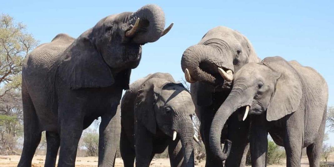 Enamórate con la majestuosidad de los elefantes