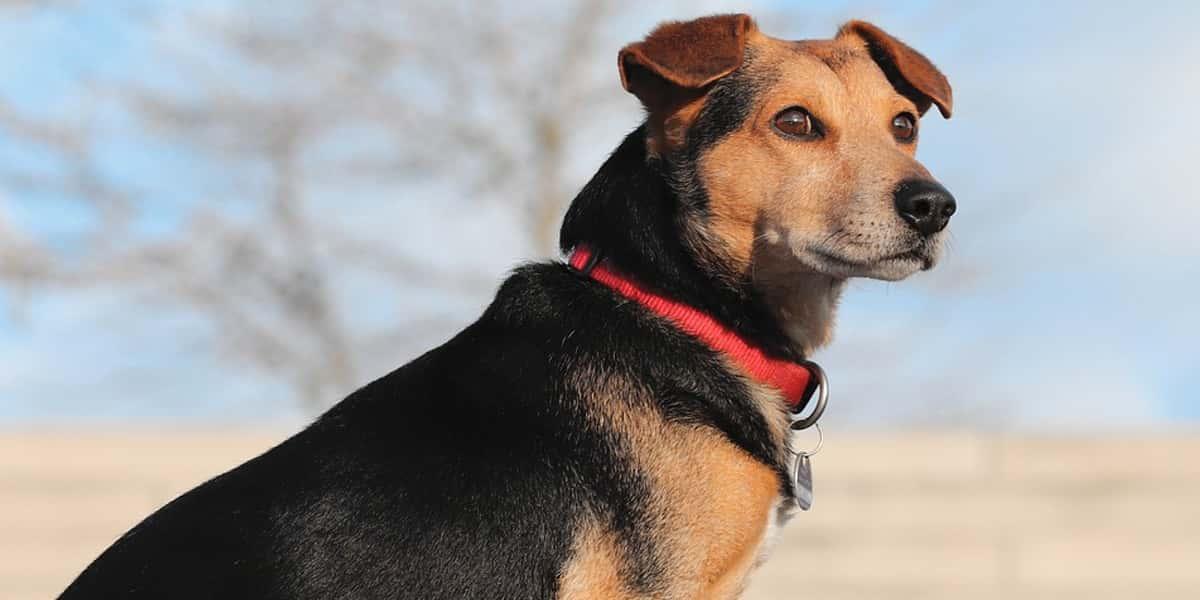 La gran mentira sobre la edad de los perros