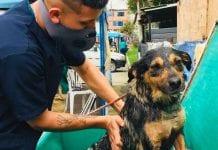 Lo que debes hacer si encuentras un animal sin hogar en peligro
