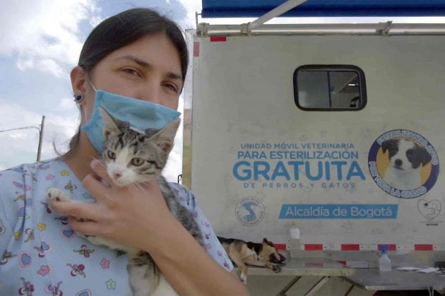Se reactivaron esterilizaciones para animales vulnerables en Bogotá
