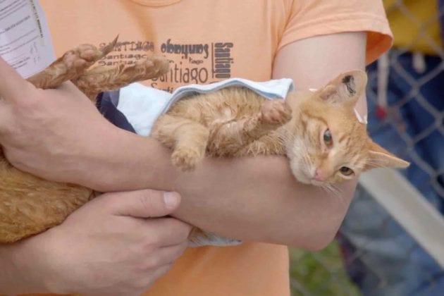Se reactivaron esterilizaciones para animales vulnerables en Bogotá (3)-min