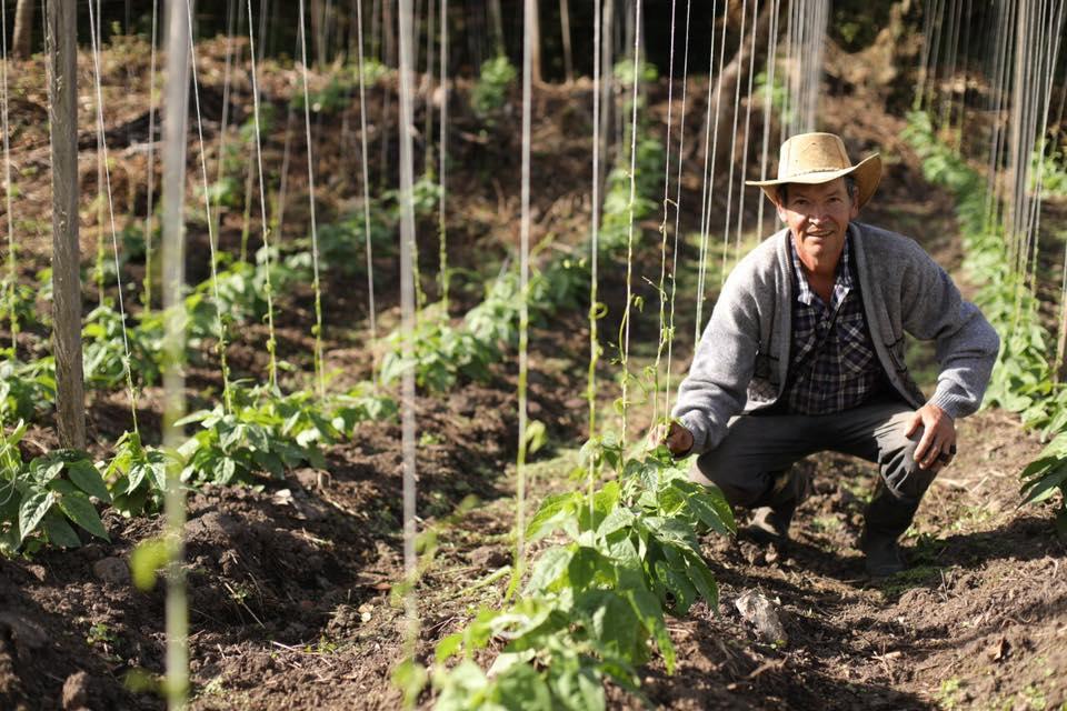 productores Cundinamarca