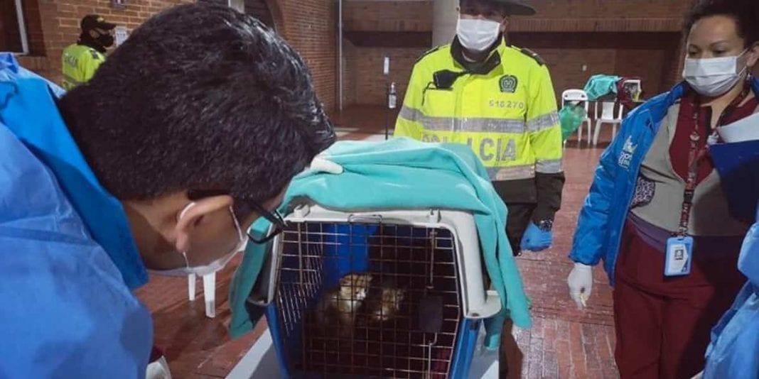 ¡Por fin! llegaron los 252 gatos provenientes de Santa Marta