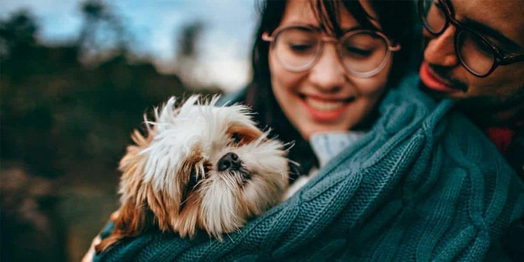 ¿Interesado en adoptar una mascota Esta información es para ti