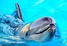 ¿Realmente es tan inteligente el delfín