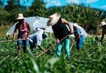 Abren convocatoria en Cundinamarca para pequeños y medianos productores