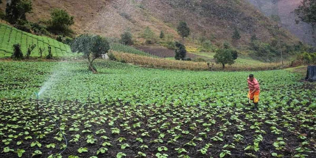 Hoy finaliza convocatoria para productores rurales de Bogotá