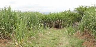 Llano Verde