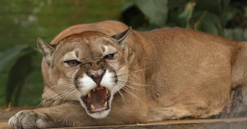 Más de 700 millones se invierten para alimentación en los zoológicos de Cundinamarca