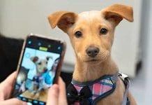 Se parte del programa 'Hogares de Paso' del Protección Animal