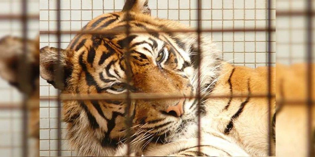 ¿Pierden los animales el miedo a los depredadores tras contacto humano