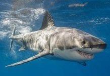 10 datos de los tiburones que querrás conocer