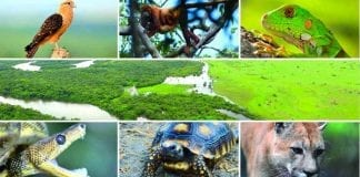 2.600 animales regresarán a su hábitat para conmemorar elDía Nacional de la Biodiversidad
