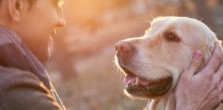 Así puede identificar el hiperapego en los perros