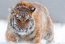 Conoce los 5 mamíferos más rápidos del mundo