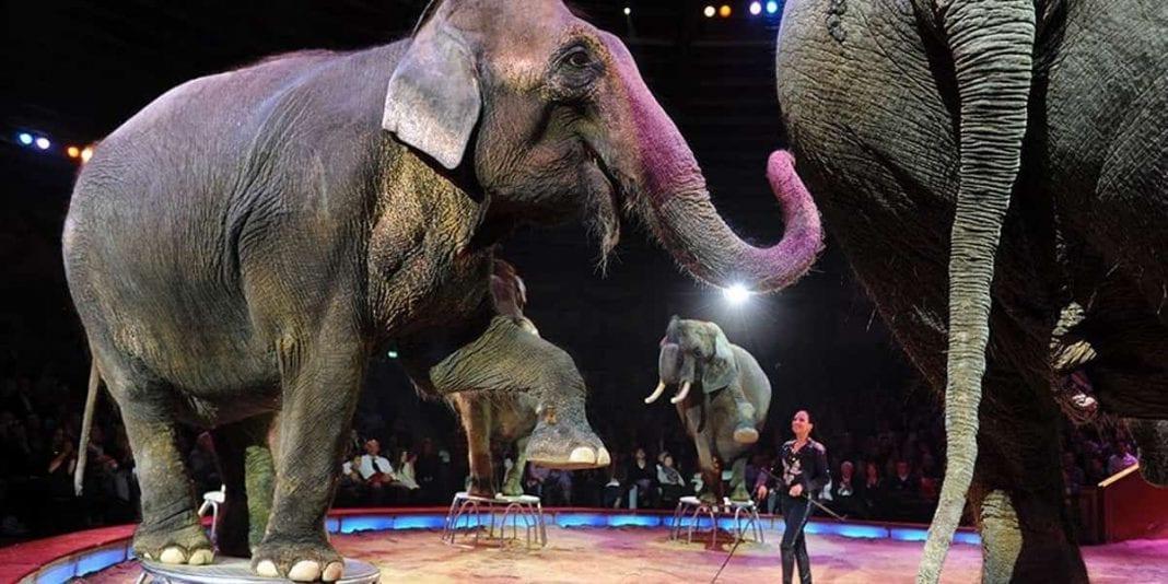 Francia prohibirá animales salvajes en circos y reproducción en cautiverio