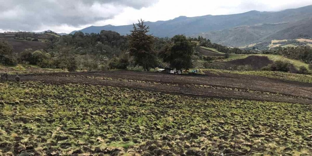 Hallan cultivos ilegales de papa en zona de páramo cerca a Bogotá
