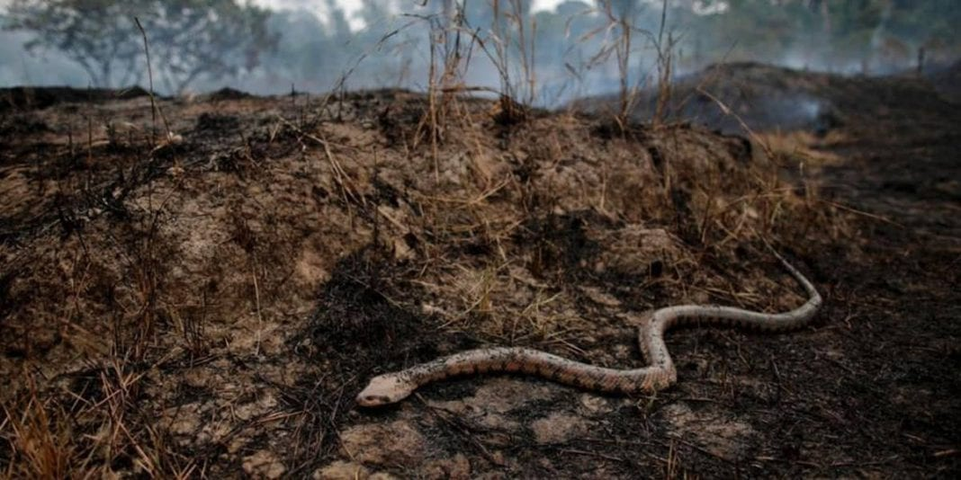 Incendios ¿Qué pasa con los animales que viven en el Amazonas