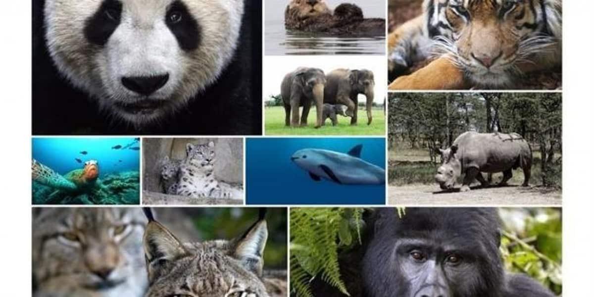 ONU advierte sobre el poco tiempo para evitar sexta extinción masiva del planeta