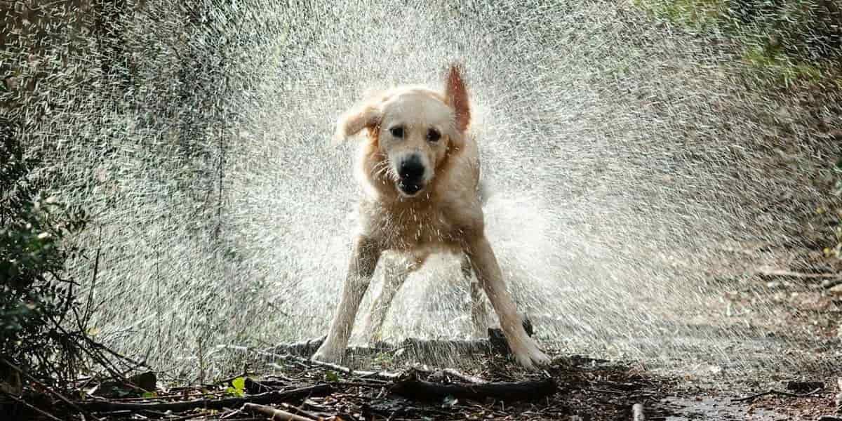 Recomendaciones para cuidar de los animales en tiempos de lluvia