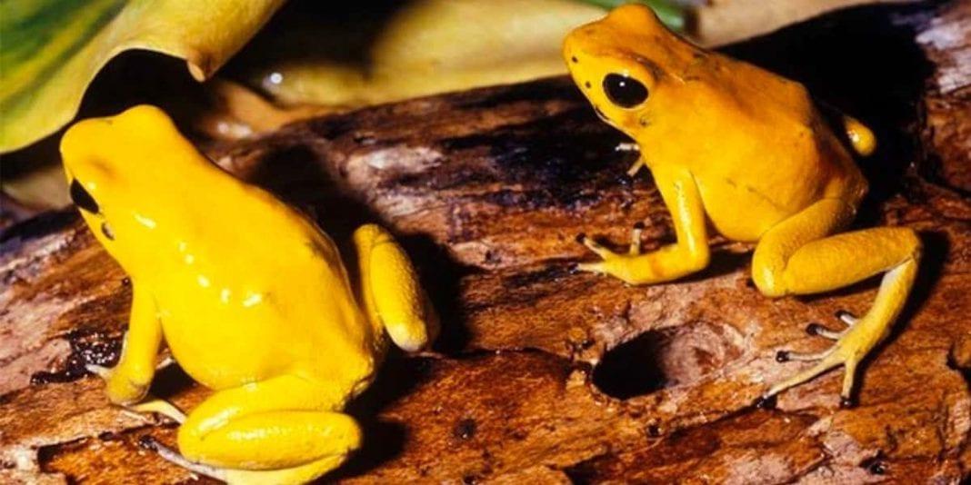Top 5 de los animales más venenosos del mundo