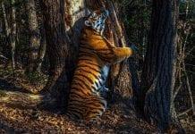 'El abrazo', ganadora a la mejor fotografía de vida salvaje